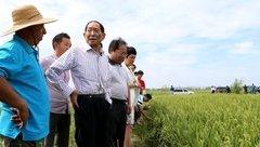 Thế giới - Giải mã giống lúa nước mặn của Trung Quốc