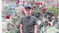 """Thư không gửi - Vụ cây hồng cổ bị đánh cắp: Hãy đợi đấy - kẻ """"đào hoa""""!"""