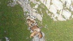 Hồ sơ - Bí ẩn hàng loạt vụ động vật tự tìm đến cái chết