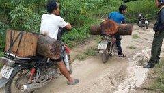 Điểm nóng - Điều tra vụ gỗ quý bị đốn hạ, kiểm lâm bị dọa giết