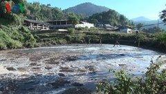 """Điểm nóng - Điện Biên """"kêu cứu"""" vì ô nhiễm chất thải từ cây dong riềng"""