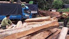 Điểm nóng - Quảng Ngãi: Vận chuyển gỗ trái phép bị phạt 45 triệu đồng