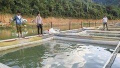 Điểm nóng - Điện Biên: Chuyển gấp các bè nuôi cá lồng sau sự cố vỡ bể chứa chất thải nhà máy sắn