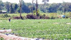Kết nối- Chính sách - Đắk Lắk: Chuyển đổi gần 12.700 ha đất rừng