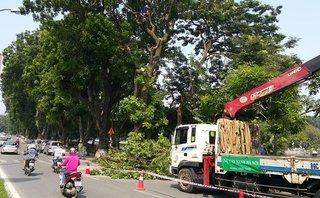 Xã hội - Hà Nội cấm ô tô đường Kim Mã, đào hầm tuyến Nhổn – Ga Hà Nội