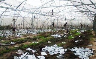 Chính trị - Xã hội - Hà Tĩnh: 'Chết yểu' tại dự án trồng rau sạch trên cát bạc màu