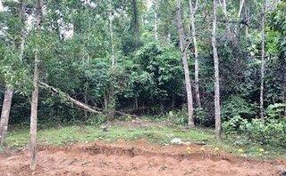 Xã hội - Ẩn số về 29 ngôi mộ được bí mật di dời ở rừng tràm biên giới