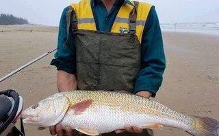 Tin nhanh - Hà Tĩnh: Câu được cá sủ vàng, trả 400 triệu chưa bán