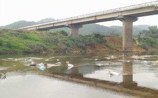 Điểm nóng - Hà Tĩnh: Ngàn Phố hay dòng sông rác?