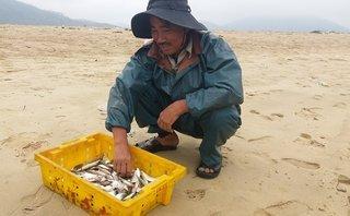 Môi trường - Hà Tĩnh: Thủy sản khan hiếm, ngư dân chẳng buồn ra khơi
