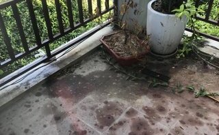 Tin nhanh - Nhà người quay clip chủ xe Mercedes đánh tài xế Mai Linh bị ném mắm tôm