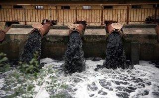 Mới- nóng - Clip: Bơm nước đen kịt tưới rau ở Hà Nội