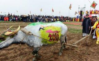 Mới- nóng - Clip: 'Vua' 90 tuổi đi cày đầu năm tại lễ hội Tịch Điền