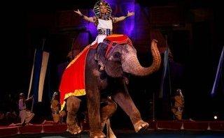 Văn hoá - Liên đoàn Xiếc VN lên tiếng trước khuyến nghị dừng biểu diễn xiếc thú hoang dã của AFA