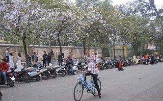 Dân sinh - Tháng 3 mùa hoa ban Tây Bắc nở tím một góc trời Hà Nội
