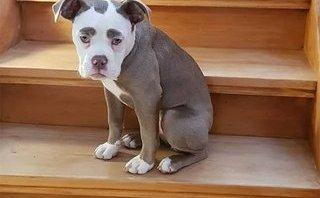 Cộng đồng mạng - Ngắm loạt ảnh chú chó có khuôn mặt buồn nhất trên Internet
