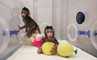 Cuộc sống số - Trung Quốc nhân bản vô tính khỉ thành công, dấy lên nhiều lo ngại với con người