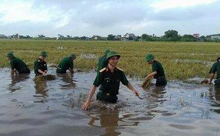 Chính trị - Xã hội - Thái Bình: Công an, quân đội gặt lúa giúp dân tránh bão