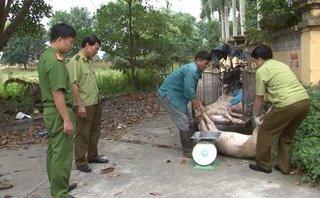 Xã hội - Hưng Yên: Thu giữ, tiêu hủy 450kg lợn chết trên đường đi tiêu thụ