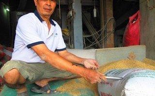 Góc nhìn luật gia - 3 cây vàng bị bỏ quên trong bao lúa: Vàng sẽ thuộc về ai?