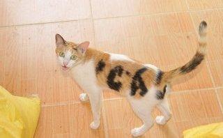 Cộng đồng mạng - Con mèo có bớt hình chữ cá trên thân khiến nhiều người xôn xao