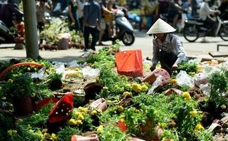 Xi nhan Trái Phải - Thuận mua vừa bán, sao lại chỉ trích người mua hoa ngày 30 Tết?