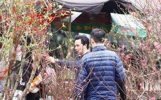 Xã hội - Đào Nhật Tân rực rỡ xuống chợ phục vụ người dân Thủ đô đón Tết