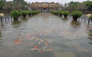 Mới- nóng - Cảnh tượng hiếm gặp: Cá bơi lội tung tăng giữa Đại nội Huế