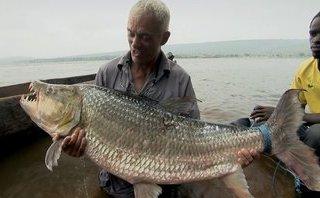 Mới- nóng - Clip: Nghẹt thở màn thu phục 'thủy quái ăn thịt đáng sợ nhất châu Phi'