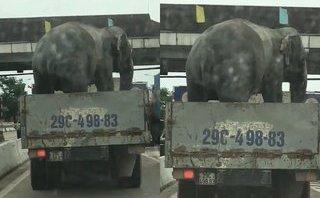 Mới- nóng - Clip: Hãi hùng cảnh xe tải chở voi chạy băng băng trên QL1A