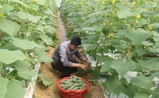 Dân sinh - Cử nhân công nghệ thông tin khởi nghiệp nhờ vườn rau sạch tiền tỷ