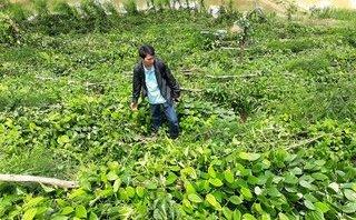 Chính trị - Xã hội - Ảnh hưởng bão số 10, hơn 5.000 trụ tiêu ở Gia Lai bị quật ngã