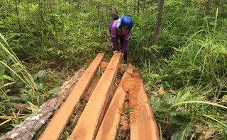 Chính trị - Xã hội - Gia Lai: Phó Chủ tịch UBND huyện trực tiếp đột kích điểm phá rừng