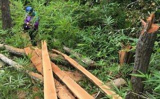 Chính trị - Xã hội - Gia Lai: Tổ trưởng tổ quản lý bảo vệ rừng... cũng đi phá rừng