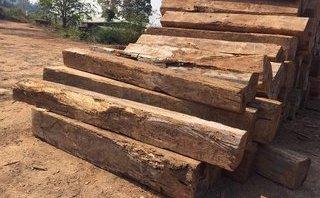 Tin nhanh - Kon Tum: Có khuất tất khi vận chuyển gỗ tang vật ra khỏi rừng?
