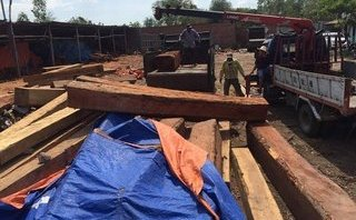 An ninh - Hình sự -  Đột kích xưởng gỗ, bắt khẩn cấp đối tượng nghi mua bán, tàng trữ gỗ trái phép