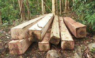 An ninh - Hình sự - Khởi tố hình sự vụ án khai thác gỗ trái phép tại núi Chư Jú