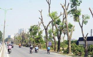 Mới- nóng - Clip: Xót xa hàng cây đường Phạm Văn Đồng sau ngày chặt hạ