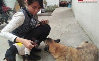 Gia đình - Đón Tết cùng những chú chó cô đơn