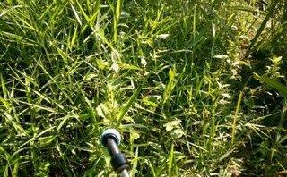 Tin nhanh - Phát hiện thi thể trẻ sơ sinh bị phân hủy trong bụi cỏ