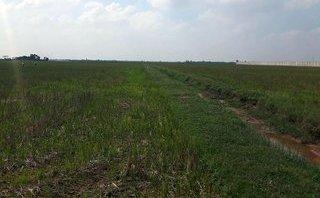 Xã hội - Nam Định: Sáu nông dân bỏ hàng chục tỷ đồng gom đất nông nghiệp