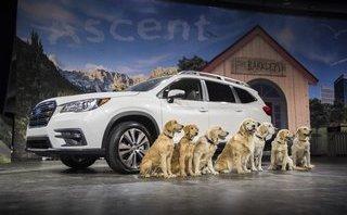 Xe++ - SUV Subaru Ascent 2019 ra mắt, cạnh tranh trực tiếp Ford Explorer