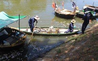Chính trị - Xã hội - Đà Nẵng: Cá nổi trắng kênh Phú Lộc một cách bất thường