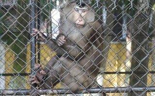 Video - Người dân Đà Nẵng tiếc nuối trước thông tin vườn thú sắp sửa giải thể