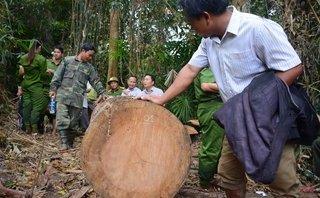Môi trường - Kiểm lâm phải cam kết... bảo vệ rừng