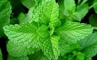 Tư vấn - 4 loại rau có tác dụng trị hôi miệng cực kỳ hiệu quả