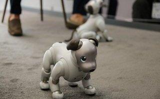 Sản phẩm - Chó robot Aibo thế hệ 2 xuất hiện tại CES 2018