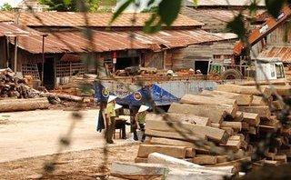 Xã hội - Hai cán bộ kiểm lâm ký khống hàng trăm khối gỗ bị khai trừ Đảng