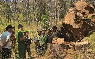 An ninh - Hình sự - Điều tra nhóm lâm tặc vào vườn Quốc gia trộm gỗ quý