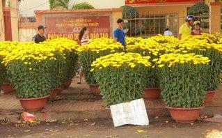 Xã hội - Đắk Lắk: Hoa Tết, bán tháo, báo lỗ vẫn không có người mua